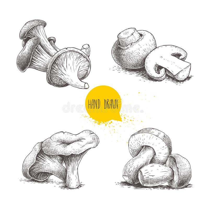 Hand drawn sketch style mushrooms compositions set. Champignons, oysters, chanterelles and porcini mushrooms. Organic forest and f. Arm fresh food vector stock illustration