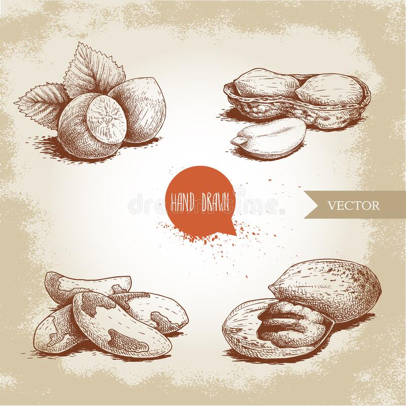 Free Hand Drawn Sketch Style Nuts Set. Hazelnuts With Leaves, Peanuts, Brazilian Nuts And Pecan Groups. Healthy Food Illustration. Vect Royalty Free Stock Image - 188192366