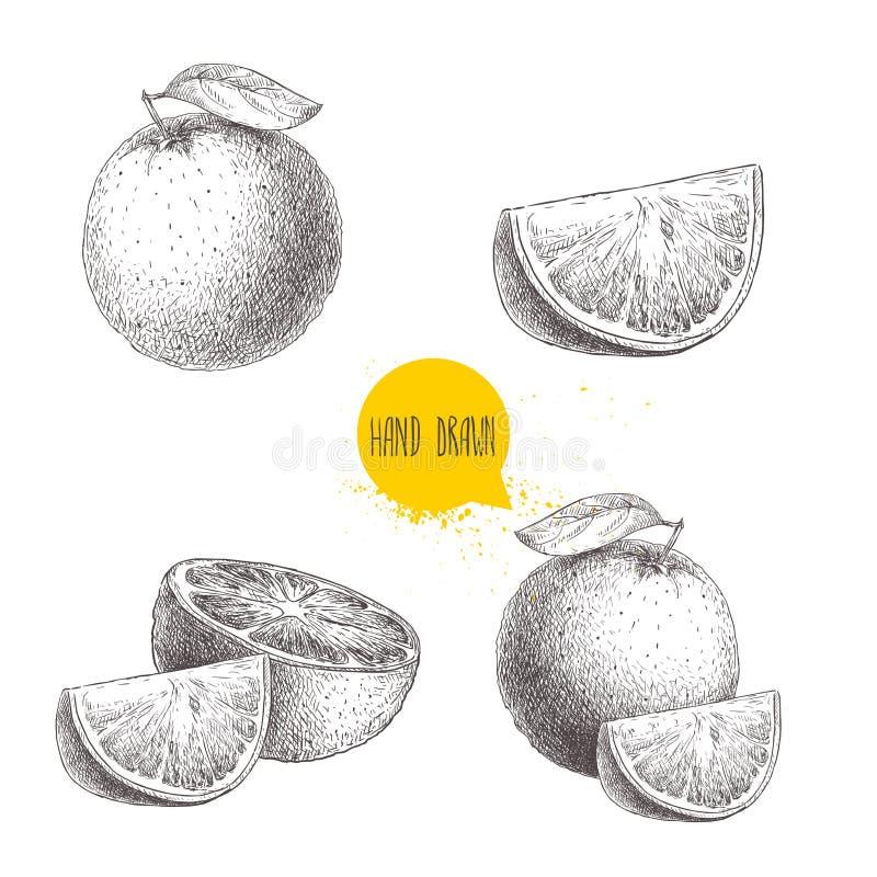 Hand drawn sketch style orange fruit compositions set. Whole fruit and slices. Vector citrus fruit illustration. Isolated on white background stock illustration