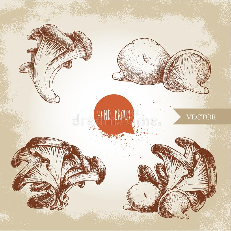 Hand drawn sketch style oyster mushroom bunches set. Fresh farm food vector illustrations collection. royalty free illustration