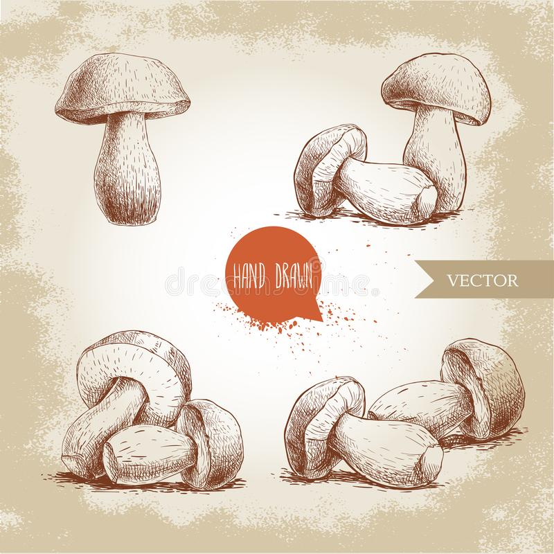 Hand drawn sketch style porcini mushroom set. Fresh forest boletus edulis. Italian food ingredient. Fresh market product stock illustration
