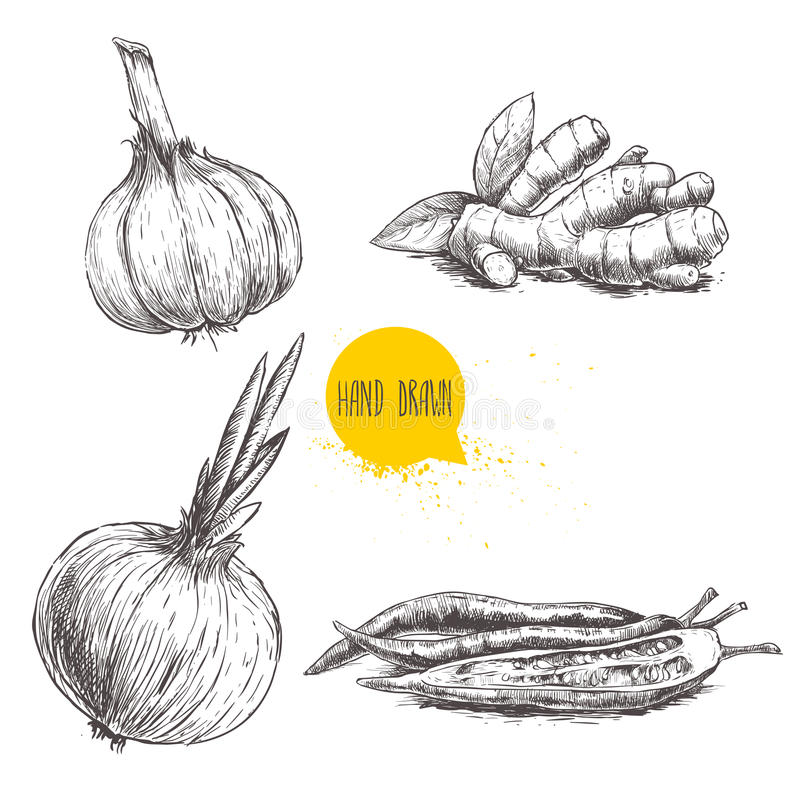 Hand drawn sketch style set illustration of different spices . Garlic, ginger root, onion and red hot chili peppers. stock illustration