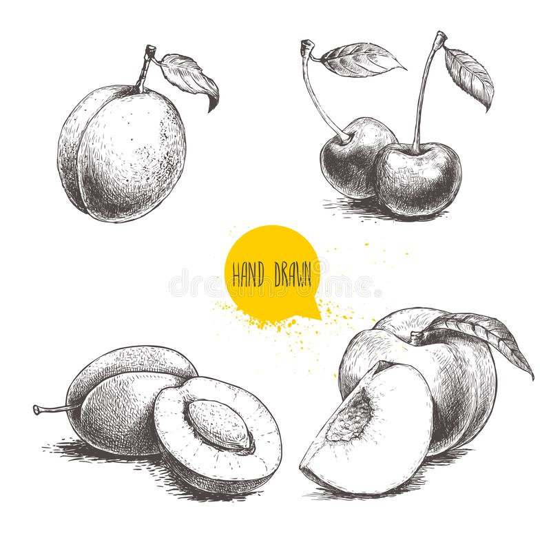 Hand drawn sketch style summer fruits set. Plum, apricot, cherry and peach compositions. Healthy organic food. Farm market product. S. Best for package design stock illustration