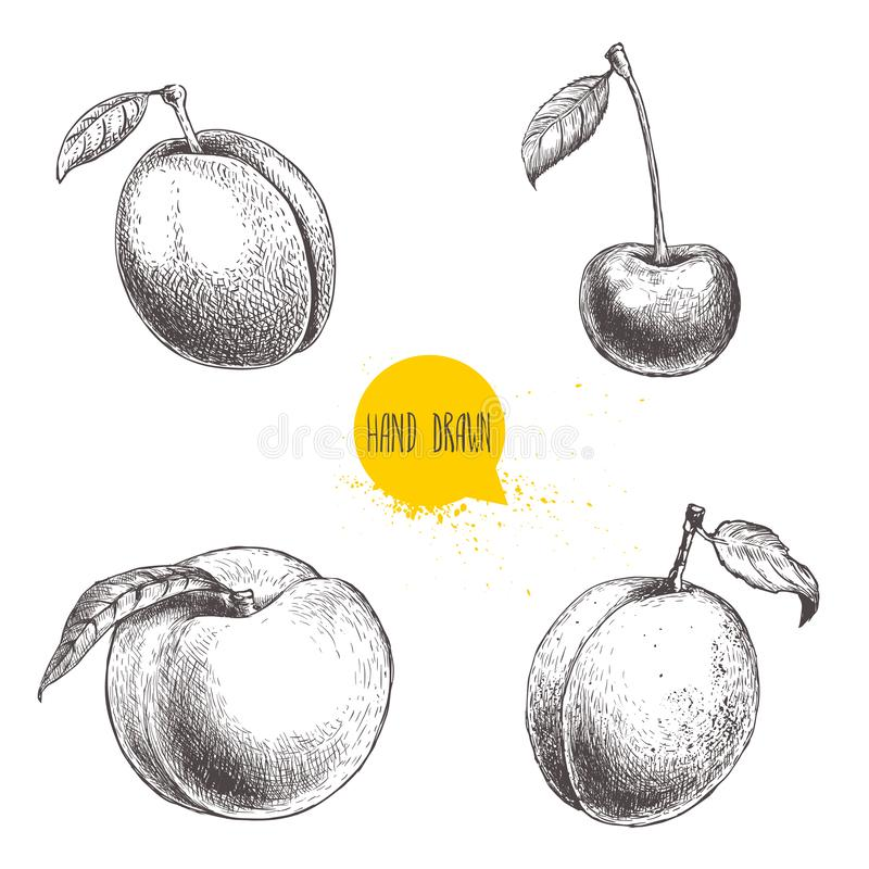 Hand drawn sketch style summer fruits set. Plum, apricot, cherry and peach. Healthy organic food. Farm market products. Best for p royalty free illustration