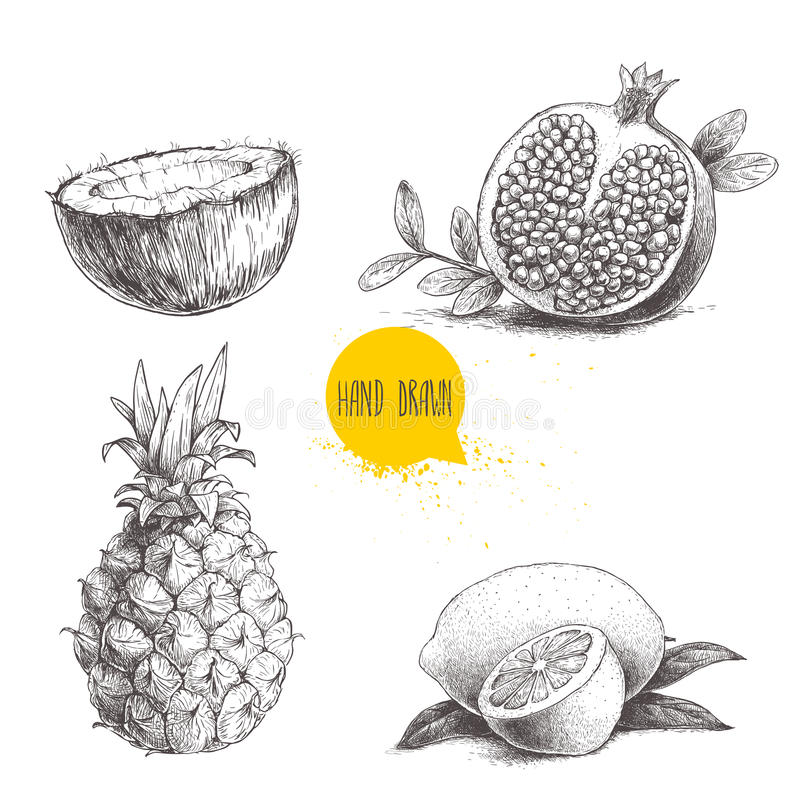 Hand drawn sketch style tropical fruits set isolated on white background. Slice of lemon with leaf, half of coconut, pineapple and. Half of pomegranate. Eco royalty free illustration