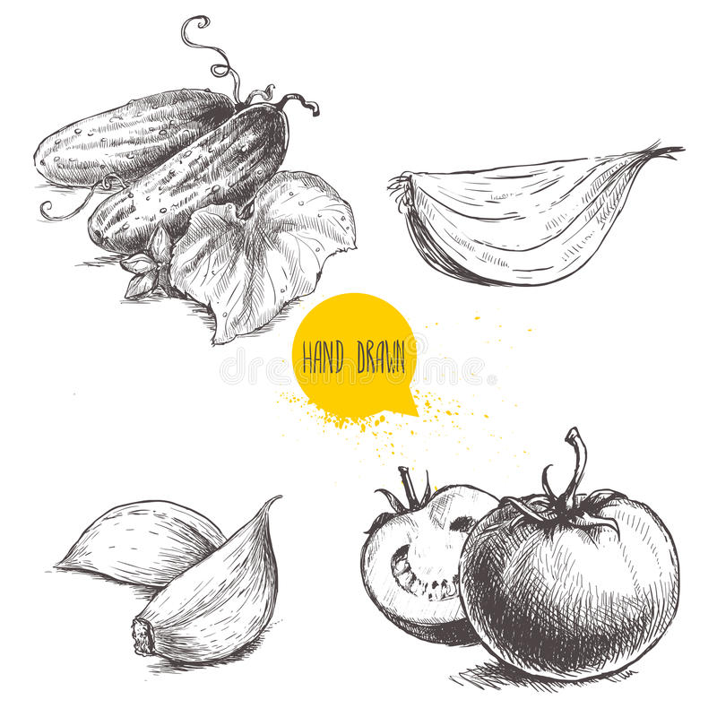 Hand drawn sketch style vegetables set. Ripe tomatoes, onion slice, cucumbers with leaf and garlic. Vintage fresh farm market food illustration royalty free illustration