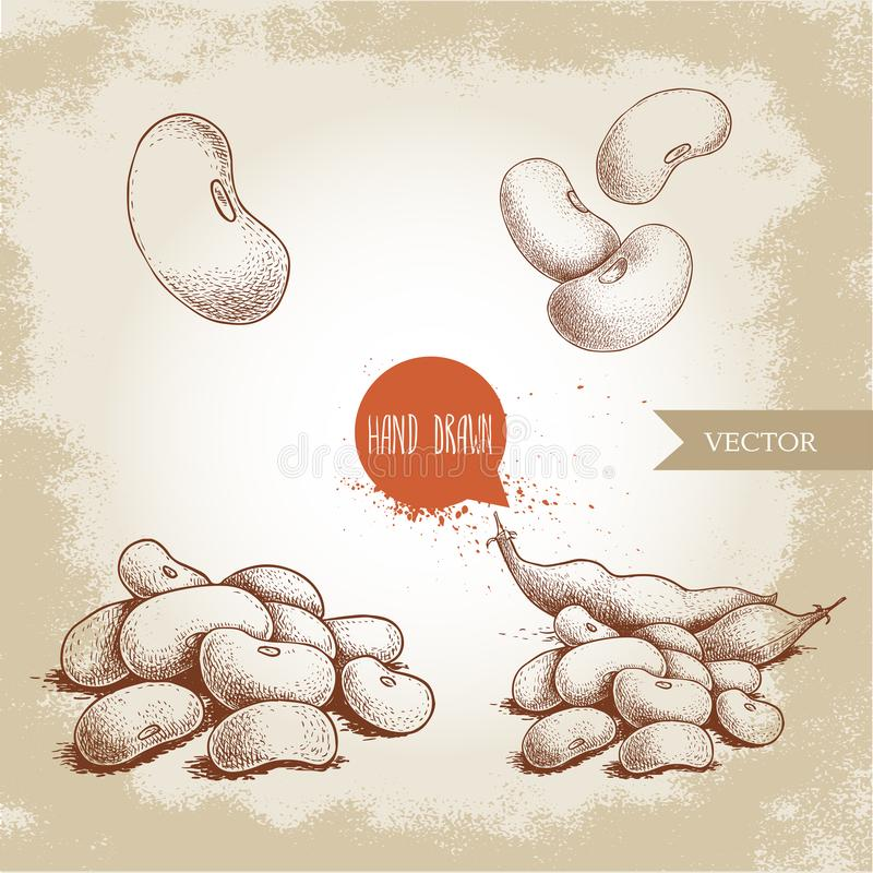 Hand drawn sketch style white beans set. Singles and group. Collection of vector illustration of healthy diet food isolated on old vector illustration