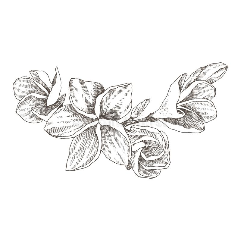 Hand drawn sketch tropical flower Plumeria. Botanical illustration engraving style with watercolor spot. Highly detailed royalty free illustration
