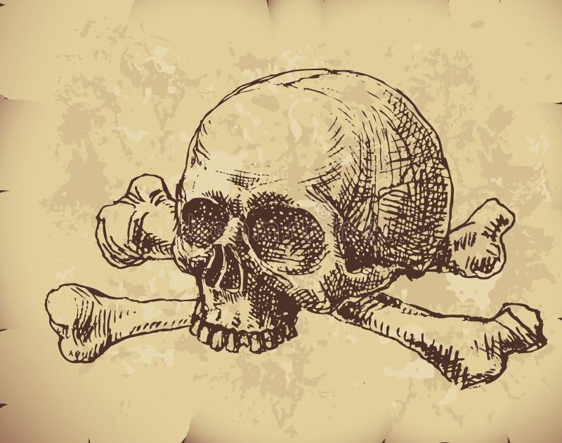 Hand drawn skull royalty free illustration