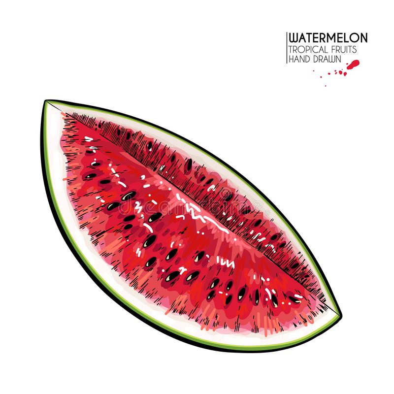 Hand drawn sliced watermelon. Vector colored engraved illustration. Juicy summer fruit. Food healthy ingredient. For. Cooking, cosmetic package design vector illustration