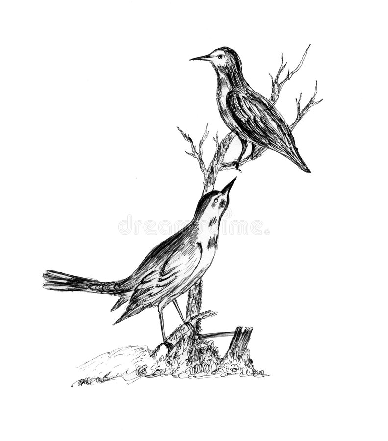 Download Hand Drawn Sparrows stock illustration. Illustration of illustrations - 4184250