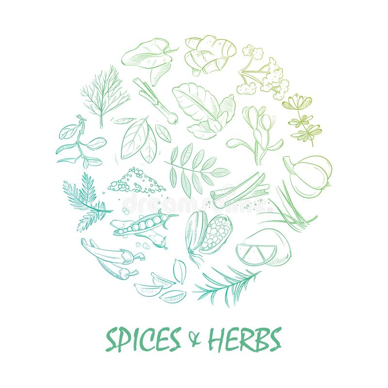 Free Hand Drawn Spice And Herbs Bright Royalty Free Stock Photo - 109484115