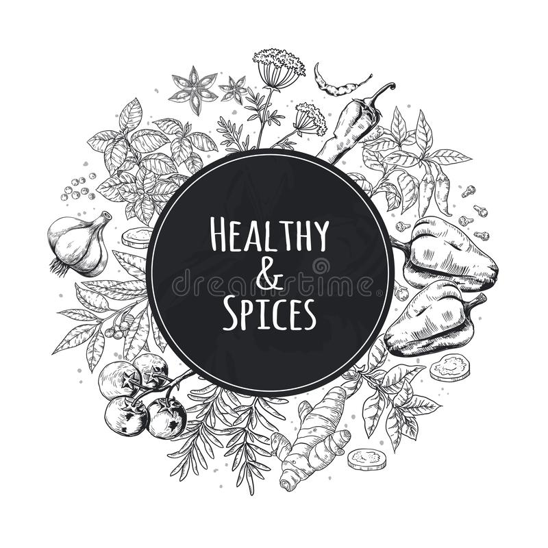 Hand drawn spices background. Asian and Indian food herbs and spices, gourmet menu sketch elements. Cooking vector vector illustration