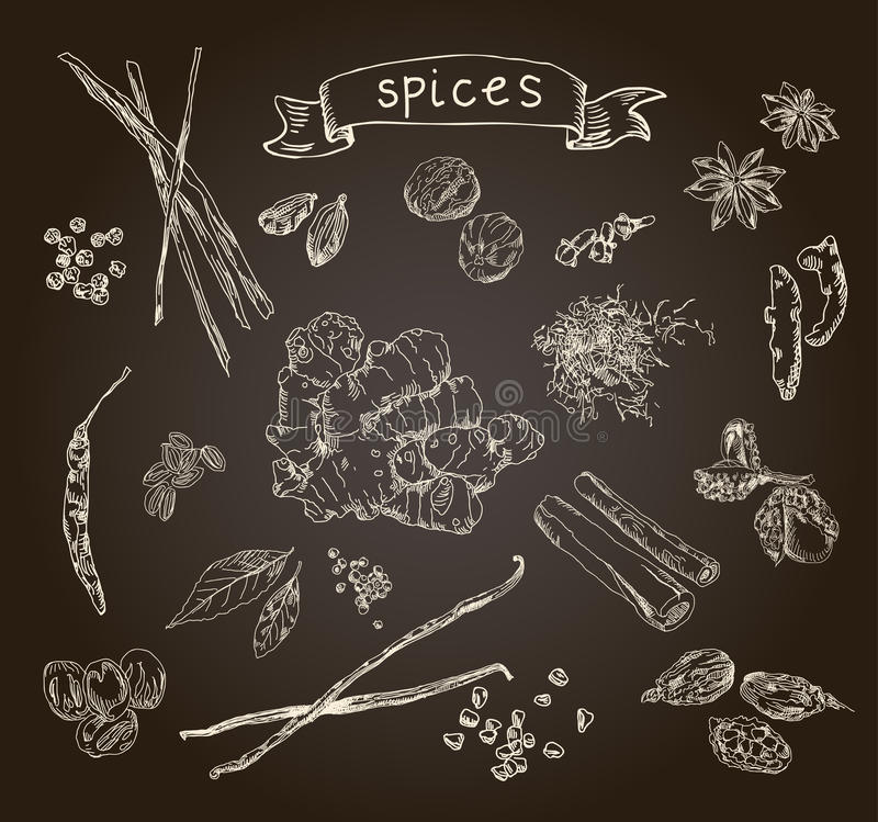 hand drawn spices stock illustration