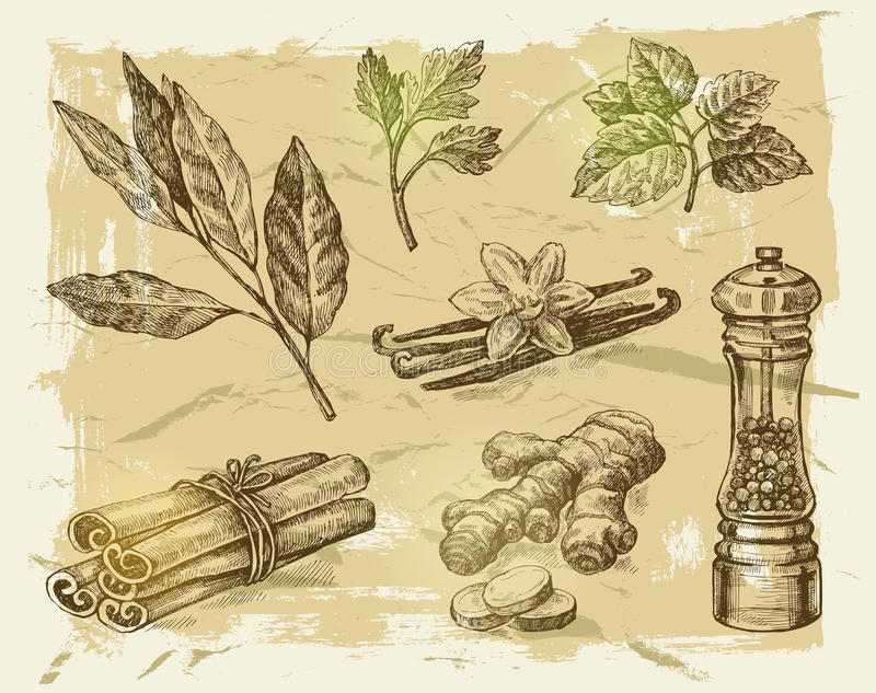 Hand drawn spices stock illustration