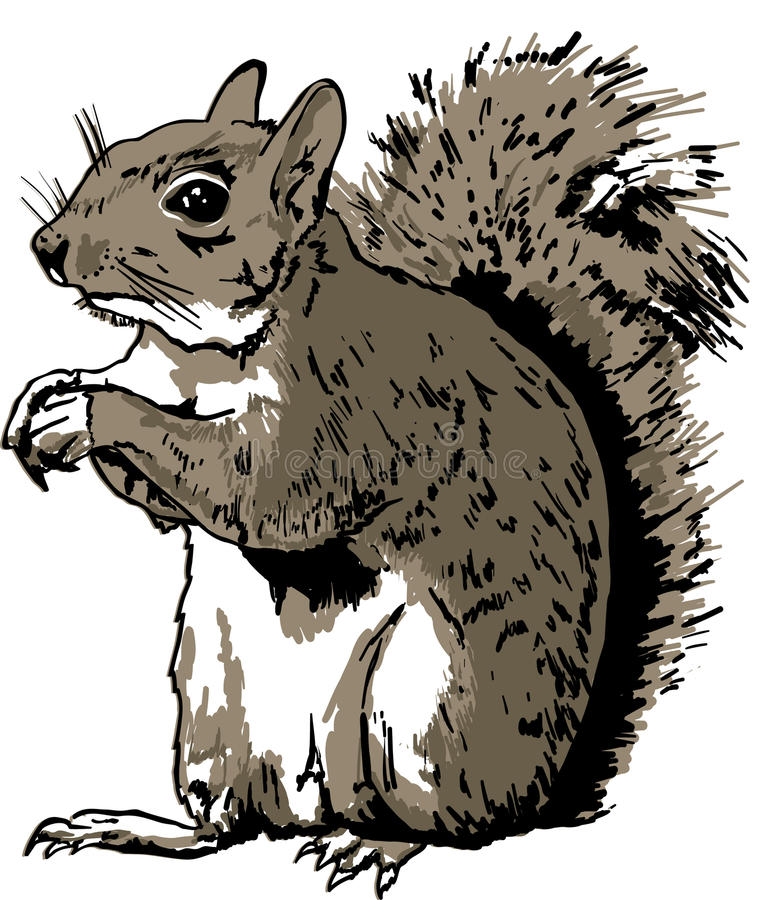 Hand Drawn Squirrel royalty free stock photography