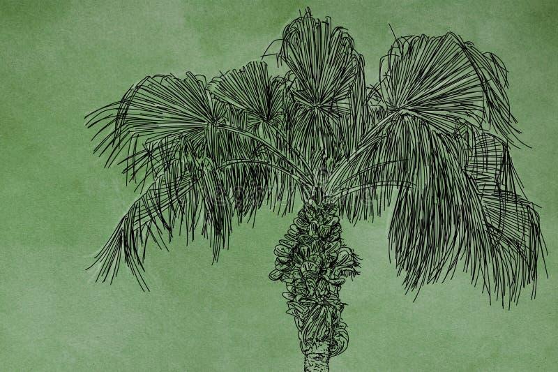 An illustration of palm vector illustration