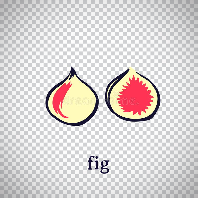 Hand drawn stylized fig. Vector fruit isolated on transparent background. Graphic illustration for logo or icon royalty free illustration