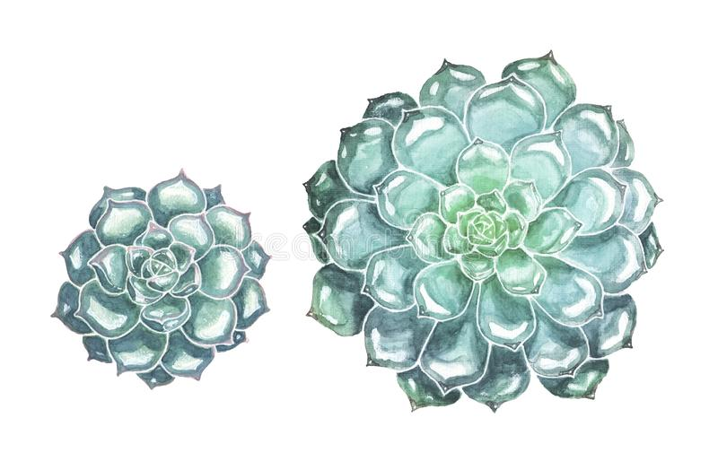 Hand Drawn Succulent Flowers on White Background vector illustration