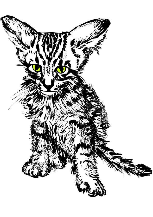 Hand-drawn Tabby Stock Photo