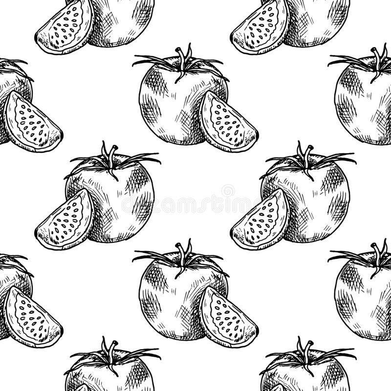 Hand Drawn tomato doodle. Sketch style icon. Seamless pattern. Isolated on white background. Flat design. Vector illustration. Food, black, vintage, drawing stock illustration