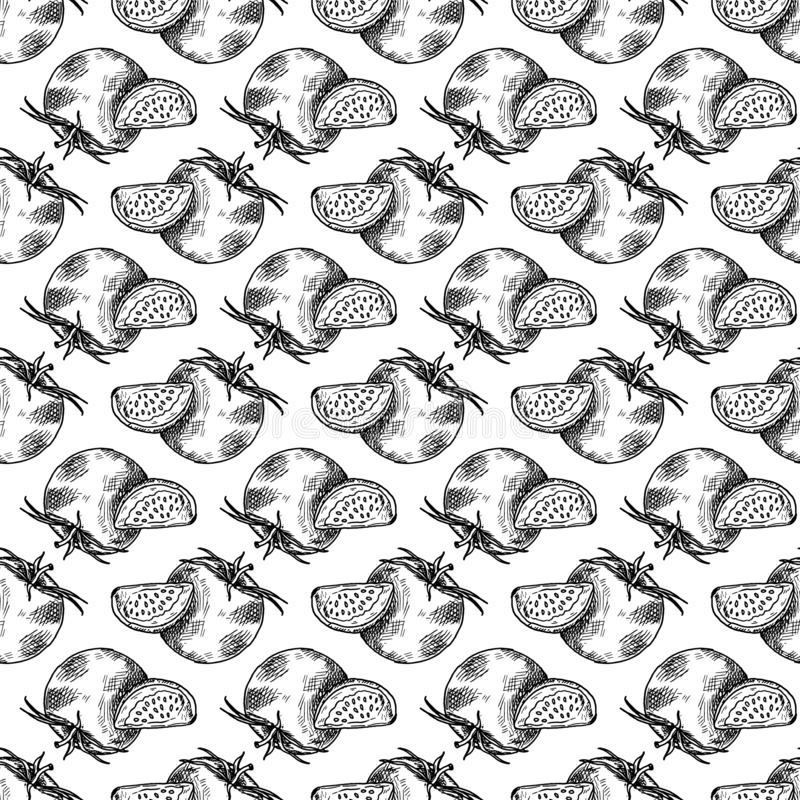 Hand Drawn tomato doodle. Sketch style icon. Seamless pattern. Isolated on white background. Flat design. Vector illustration. Food, black, vintage, drawing vector illustration