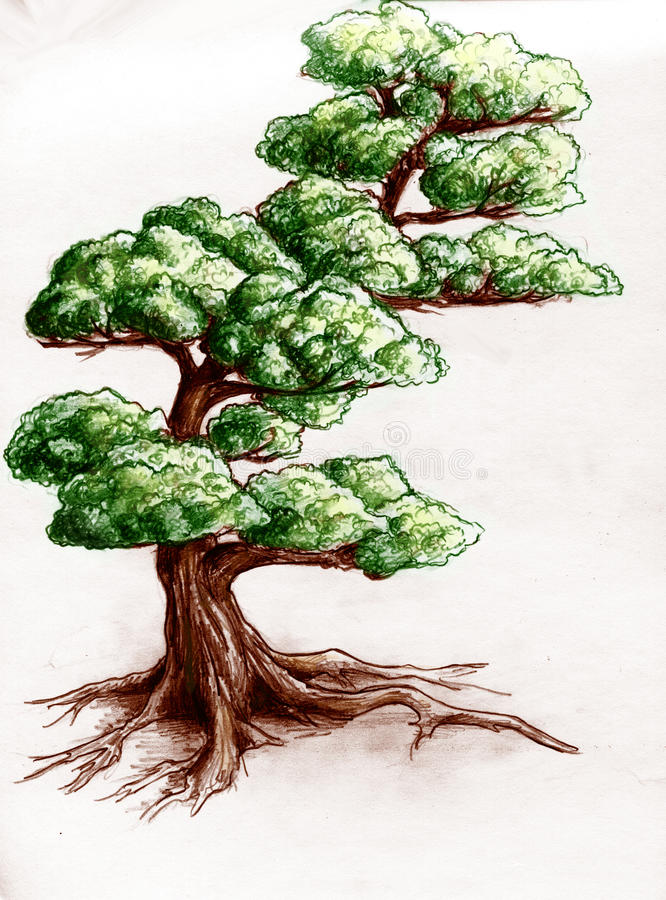 Download Hand Drawn Tree Royalty Free Stock Photo - Image: 16654695