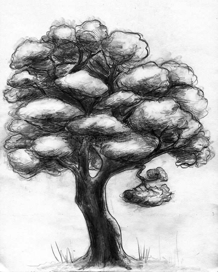Download Hand drawn tree stock illustration. Image of shadow, white - 17377335