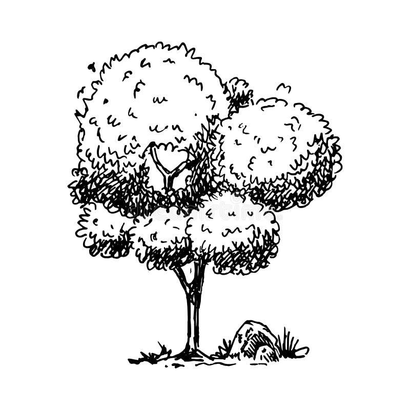 Hand Drawn tree doodle. Sketch style icon. Decoration element. Isolated on white background. Flat design. Vector illustration. Retro, line, stylized, pen royalty free illustration