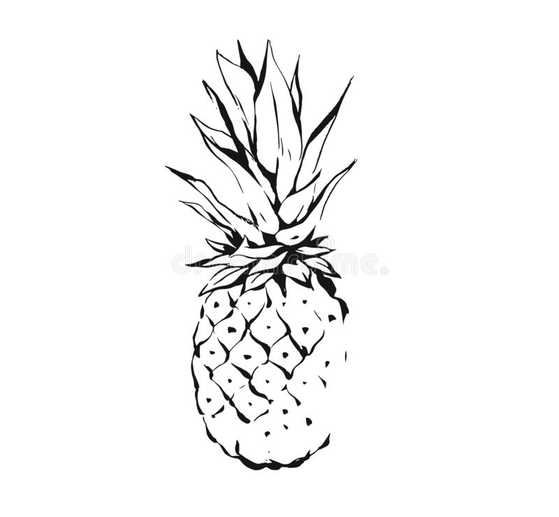 Hand drawn vector abstract exotic tropical ink graphic drawing fruit pineapple illustration icon isolated on white stock illustration