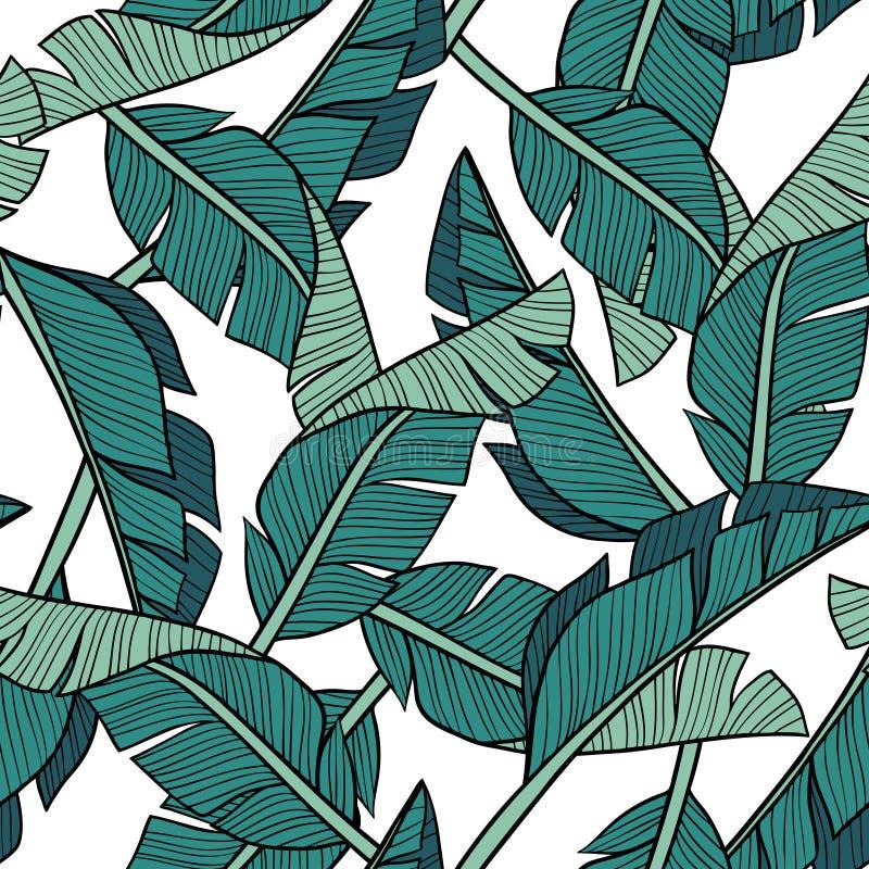 Hand drawn vector banana leaves on white background. vector illustration