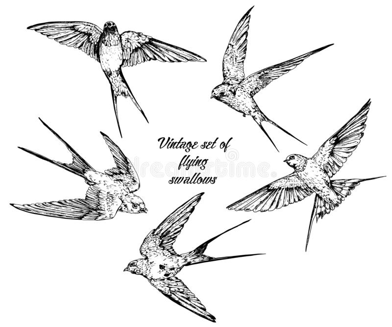 Hand drawn vector  flying swallows vintage set stock illustration