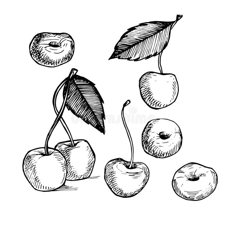Hand-drawn vector illustration. Collection of cherry. Line art. stock illustration
