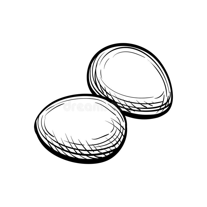 Hand drawn vector illustration of eggs. vector illustration