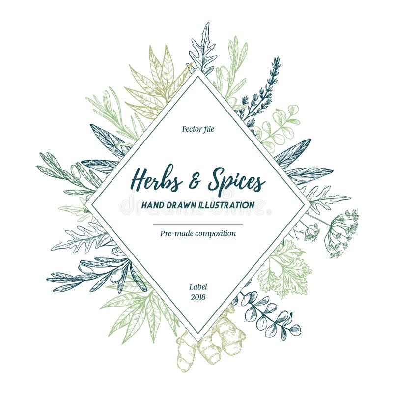 Hand drawn vector illustration. Label with herbs and spices sag vector illustration