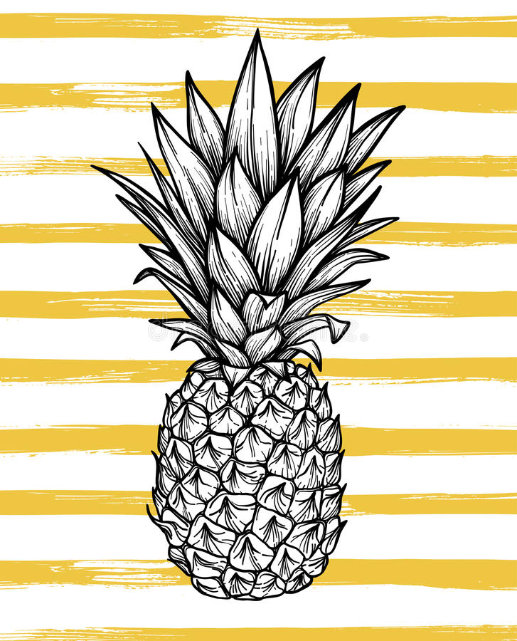 Hand drawn vector illustration - Pineapple with striped background. Exotic tropical fruit. Sketch. Outline. Perfect for vector illustration