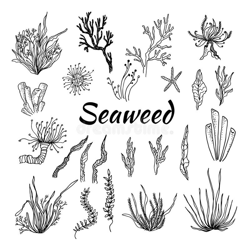 Hand drawn vector illustration - Set with seaweed. Sketch.  stock illustration