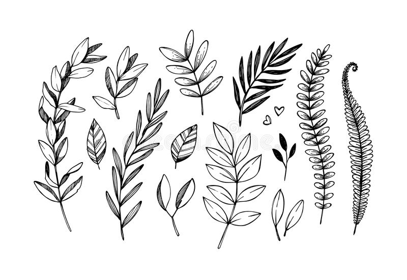 Hand drawn vector illustrations. Botanical branches of eucalyptus and fern. Floral design elements. Tattoo sketches. Perfect for royalty free illustration
