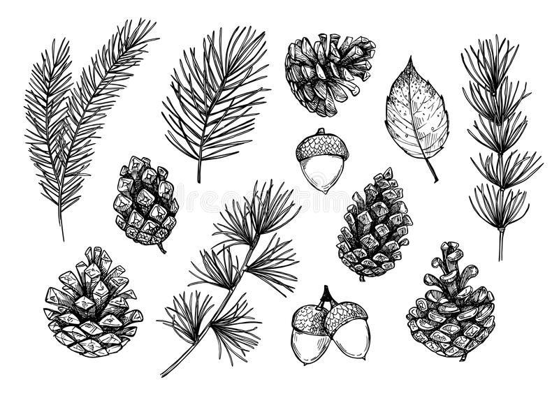 Hand drawn vector illustrations - Forest Autumn collection. Spruce branches, acorns, pine cones, fall leaves. Design elements for. Invitations, greeting cards royalty free illustration