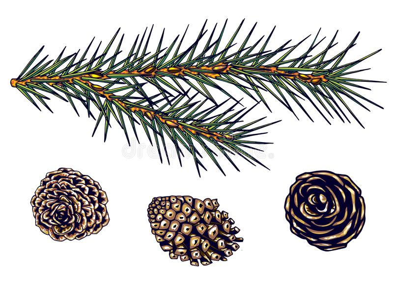 Fir branch and cones, isolate, vector, hand drawing stock images