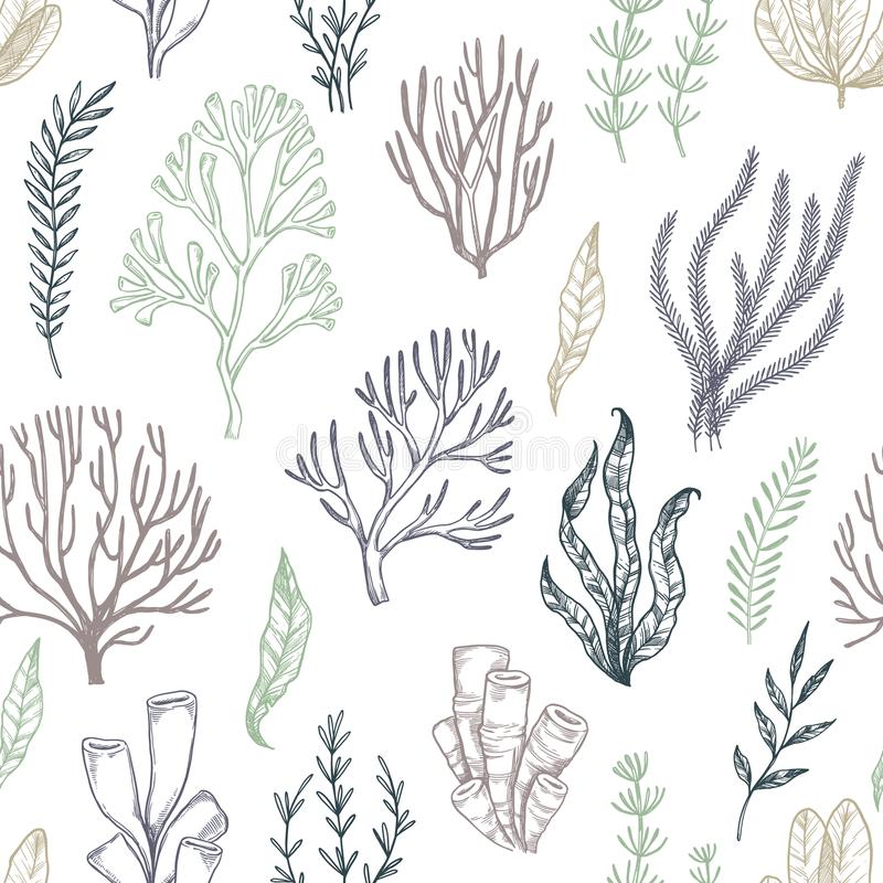 Hand drawn vector seamless patterns. Seaweed. Background with he. Rbal plants in sketch style. Perfect for textile, fabric, invitations, cards, leaflets, prints vector illustration