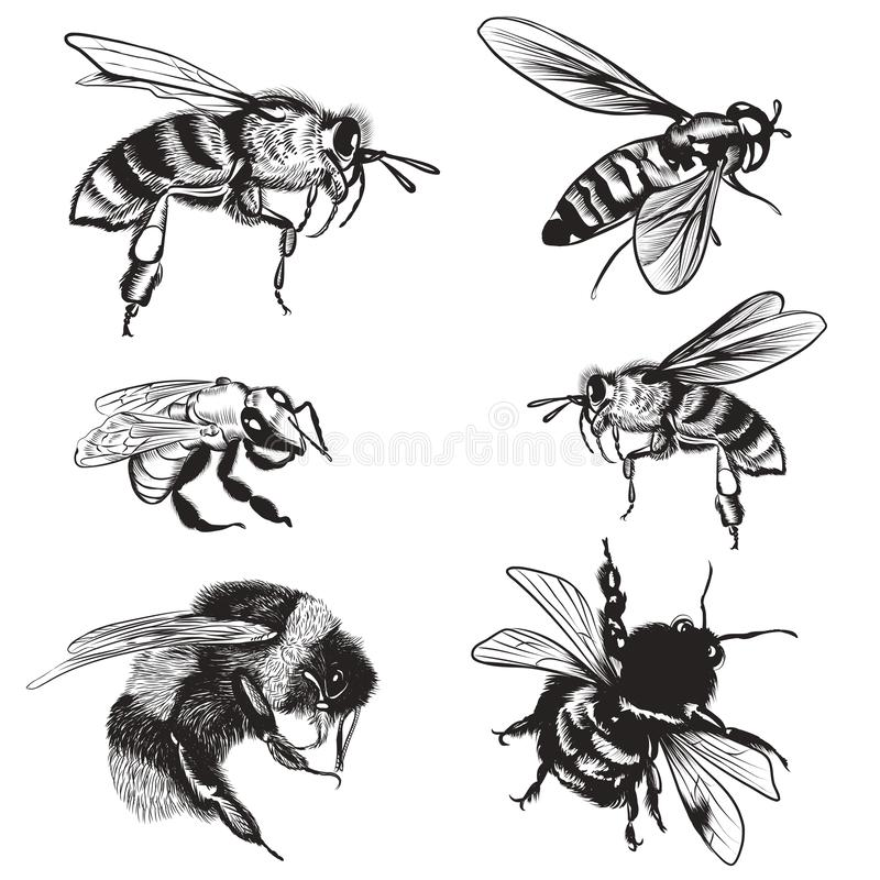 Hand drawn vector set of bees, bumblebee, high detailed insects for design royalty free illustration