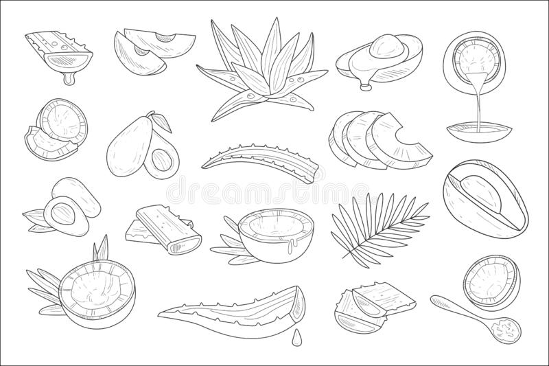 Hand drawn vector set of healthy natural products coconut, avocado and aloe. Elements for cosmetics packaging or. Set of healthy natural products coconut vector illustration