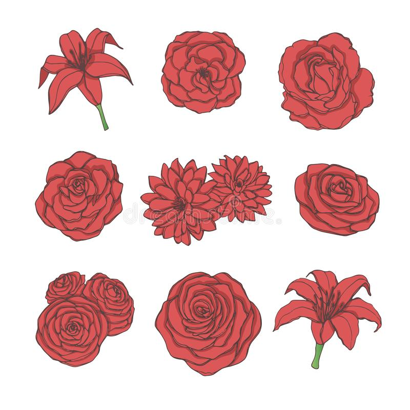 Hand drawn vector set of red rose, lily, peony and chrysanthemum flowers line art isolated on the white background stock illustration