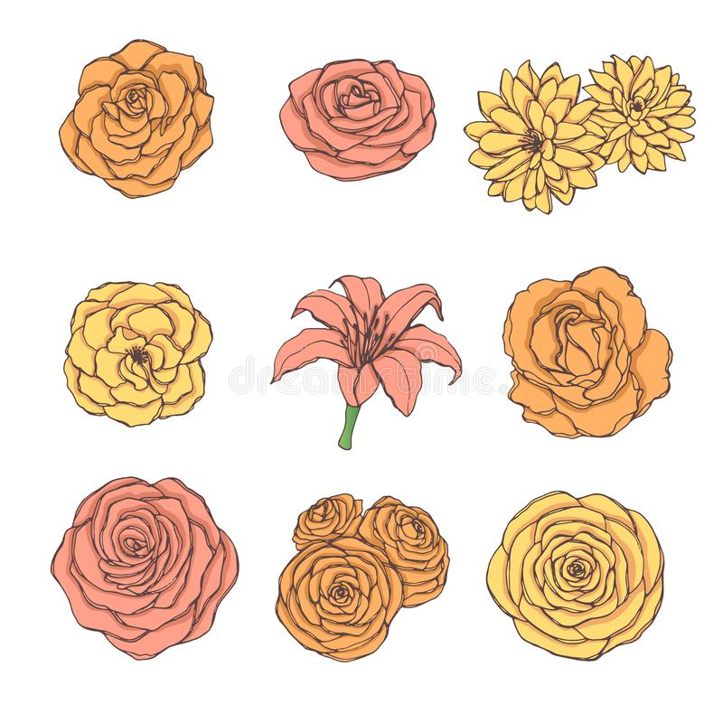 Hand drawn vector set of rose, lily, peony and chrysanthemum flowers in yellow, orange and pink colors isolated vector illustration