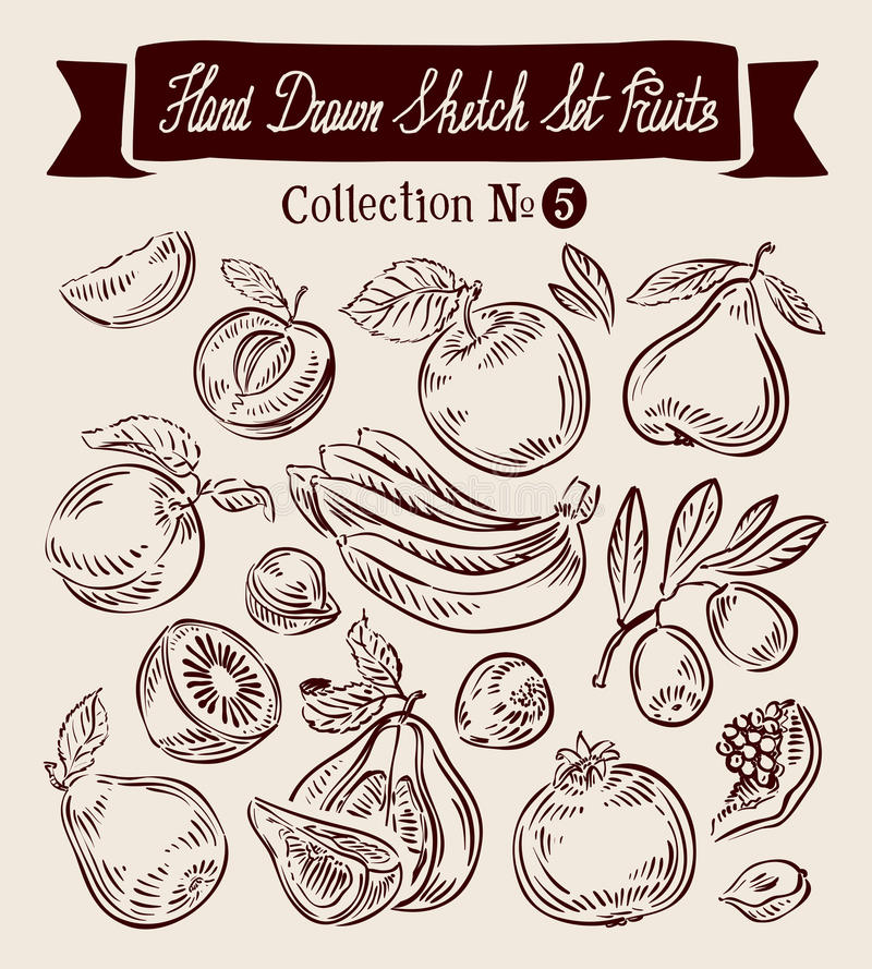 Hand drawn vector sketch collection fruit stock illustration