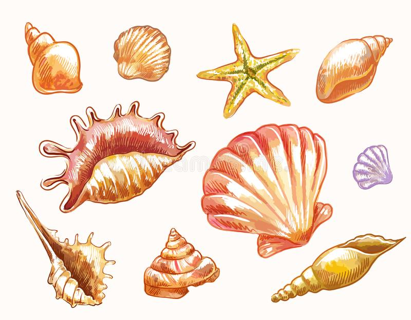 Vector seashells in sketch watercolor style isolated. Hand-drawn vector sketches of shells. Decorative elements suitable for summer or sea natural design vector illustration