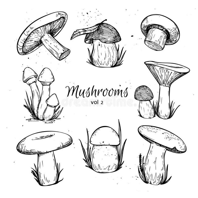 Free Hand Drawn Vector Vintage Illustration - Mushrooms. Royalty Free Stock Image - 59182596