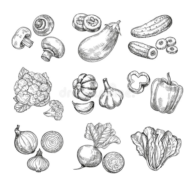 Hand drawn vegetables. Garden cauliflower, pepper and eggplant, champignons. Fresh vegan products. Sketch vegetable vector illustration