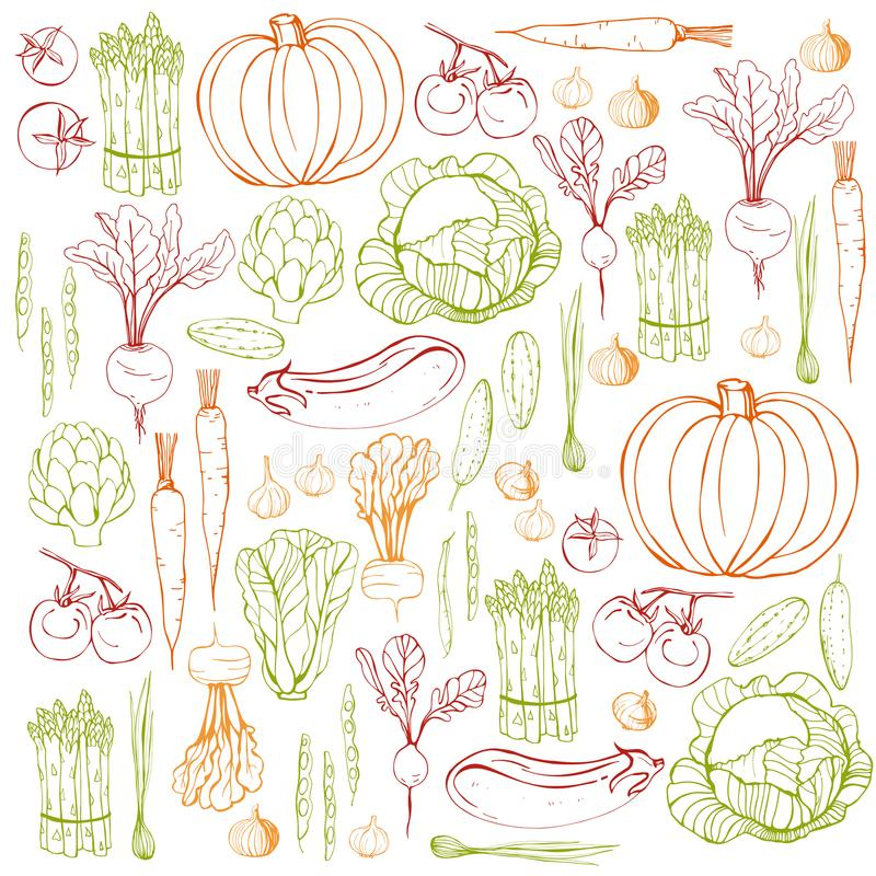 Hand drawn vegetables. Vector background royalty free illustration